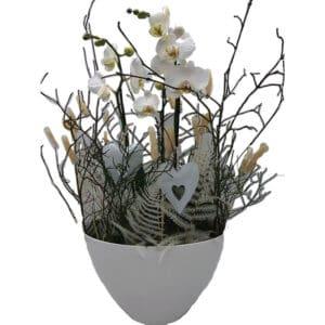 Orchidee_Äste_Frühling_Zimmerpflanze_Blumen_Buchegger_800x800_