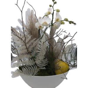 Orchidee_Topfpflanze_Blumen_Buchegger_800x800_